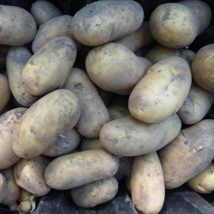 Charlotte Potatoes  Per 1kg