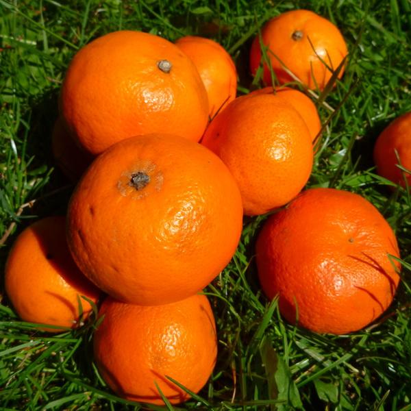 Mandarins 500g