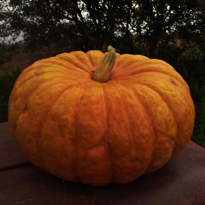Culinary Pumpkin Per Kg