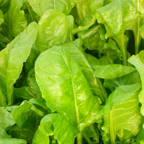 Baby Spinach  250g