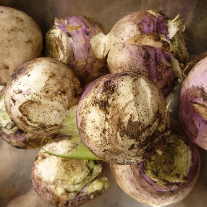 Turnips Per 500g